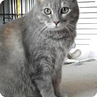Adopt A Pet :: Becca - Alexandria, VA