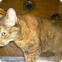 Adopt A Pet :: Mystery - New York, NY