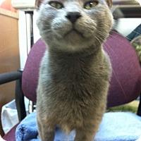 Adopt A Pet :: Lilac - Trevose, PA
