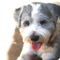 Adopt A Pet :: Cullum - adoption pending - Norwalk, CT