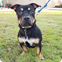 Adopt A Pet :: Loki - Homewood, AL