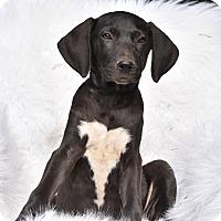 Adopt A Pet :: Julius - Charlemont, MA