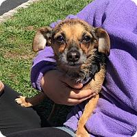 Adopt A Pet :: Kermit - Sparta, NJ