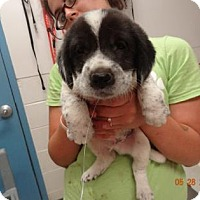 Adopt A Pet :: Bubby - Gulfport, MS