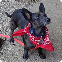 Adopt A Pet :: RADAR - Portland, OR