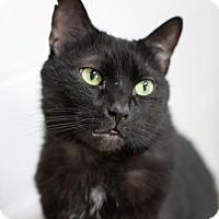 Adopt A Pet :: Onyx - Stafford, VA