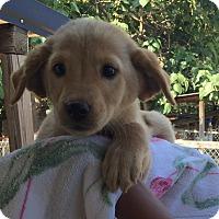 Adopt A Pet :: Paris - Philadelphia, PA