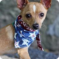 Adopt A Pet :: Tippy - Dalton, GA