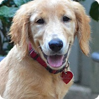 Adopt A Pet :: Tanner - Enfield, CT