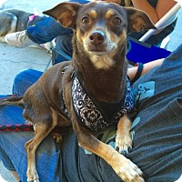 Adopt A Pet :: Joey - Mission viejo, CA