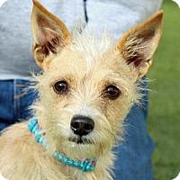 Adopt A Pet :: Jenna - Wenatchee, WA