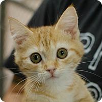 Adopt A Pet :: Mindy - Greenwood, SC