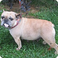 Adopt A Pet :: FRENCH TOAST - WOODSFIELD, OH