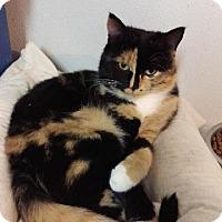 Adopt A Pet :: Karmen - Brainardsville, NY