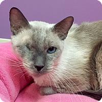Adopt A Pet :: Buddy - Addison, IL