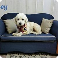 Adopt A Pet :: Finley - Arcadia, FL