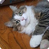 Adopt A Pet :: Dakota - Boston, MA