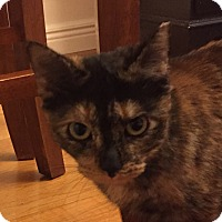 Adopt A Pet :: Opal - Worcester, MA