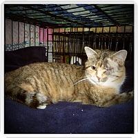 Adopt A Pet :: MARCI - Medford, WI
