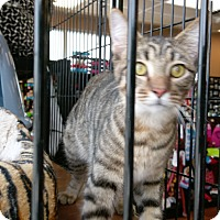 Adopt A Pet :: Nacho - Columbus, OH