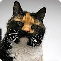 Adopt A Pet :: Maple VALENTINE'S SPECIAL! 50% - Republic, WA