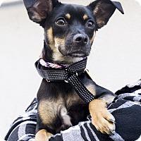 Adopt A Pet :: Expo - Los Angeles, CA