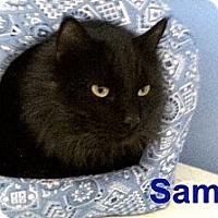 Adopt A Pet :: Sammy - Medway, MA