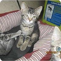 Adopt A Pet :: Venus - Sterling Hgts, MI
