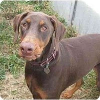 Adopt A Pet :: Dakota--adopted - New Richmond, OH