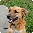 Adopt A Pet :: Meggie
