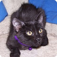 Adopt A Pet :: K-Twinkle4-Lizette - Colorado Springs, CO