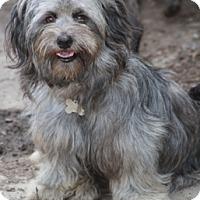 Adopt A Pet :: Queenie - Norwalk, CT