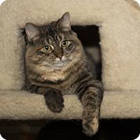 Adopt A Pet :: Cosette - Lombard, IL