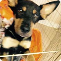 Adopt A Pet :: MINNIE GIRL - Pompton lakes, NJ