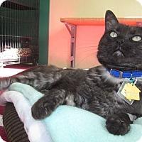 Adopt A Pet :: Edmund - Lakewood, CO