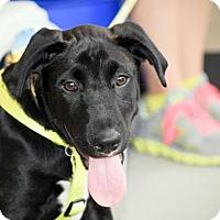 Adopt A Pet :: Tyson - Arden, NC