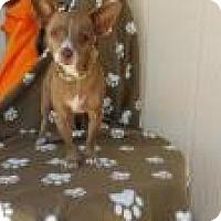 Chihuahua Mix Dog for adoption in Elk Grove, California - AZZA