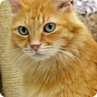 Adopt A Pet :: Mango - Morgan Hill, CA