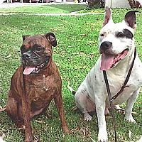 Adopt A Pet :: Kahlua & Hey - Vista, CA