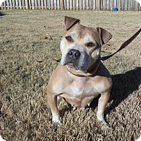 Adopt A Pet :: Dolly - Hagerstown, MD