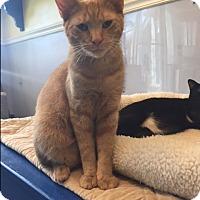 Adopt A Pet :: Clarence - Jupiter, FL