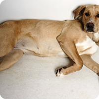 Adopt A Pet :: Sadie - Redding, CA