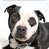 Adopt A Pet :: Cyrus - San Luis Obispo, CA