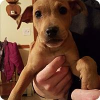 Adopt A Pet :: Alex - Kendall, NY