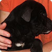 Adopt A Pet :: Garrett - Harmony, Glocester, RI