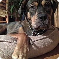 Adopt A Pet :: Sadie - Schaumburg, IL