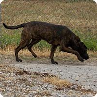Adopt A Pet :: Sirius - Lewisburg, TN