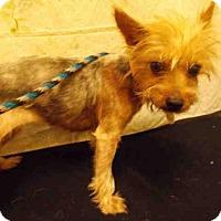 Adopt A Pet :: *CARMEN - Upper Marlboro, MD