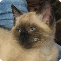 Adopt A Pet :: Chandler - Davis, CA
