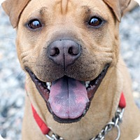 Adopt A Pet :: Lexi - Barnegat Light, NJ